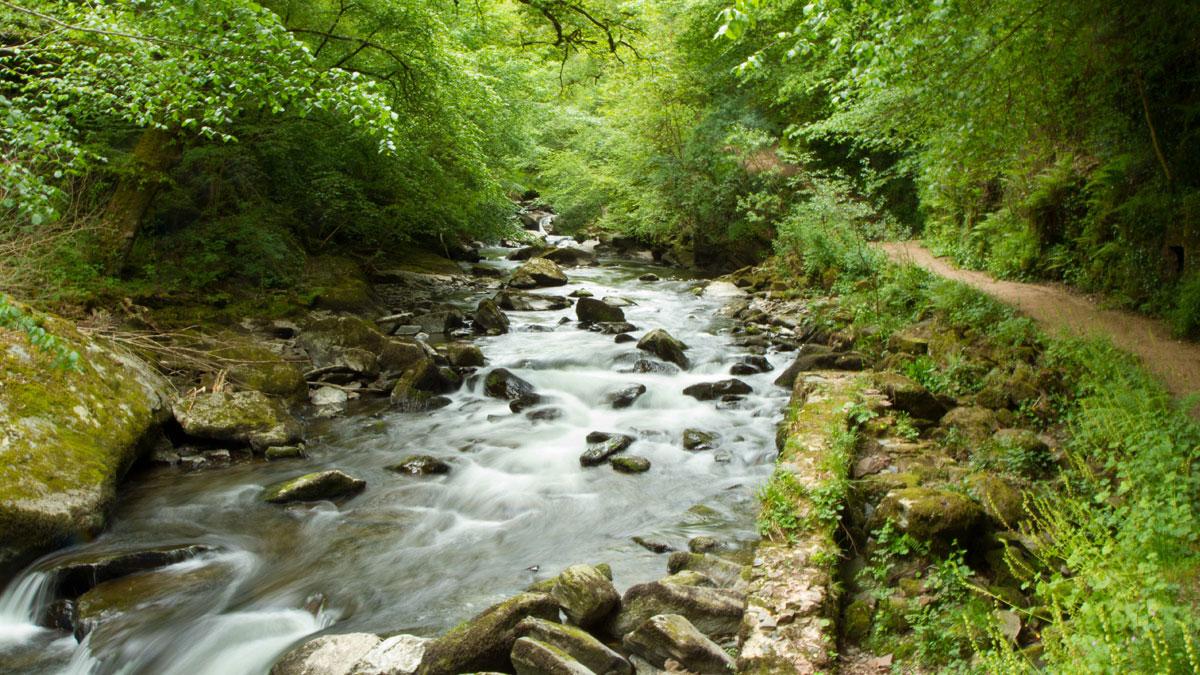 streamnearlynton